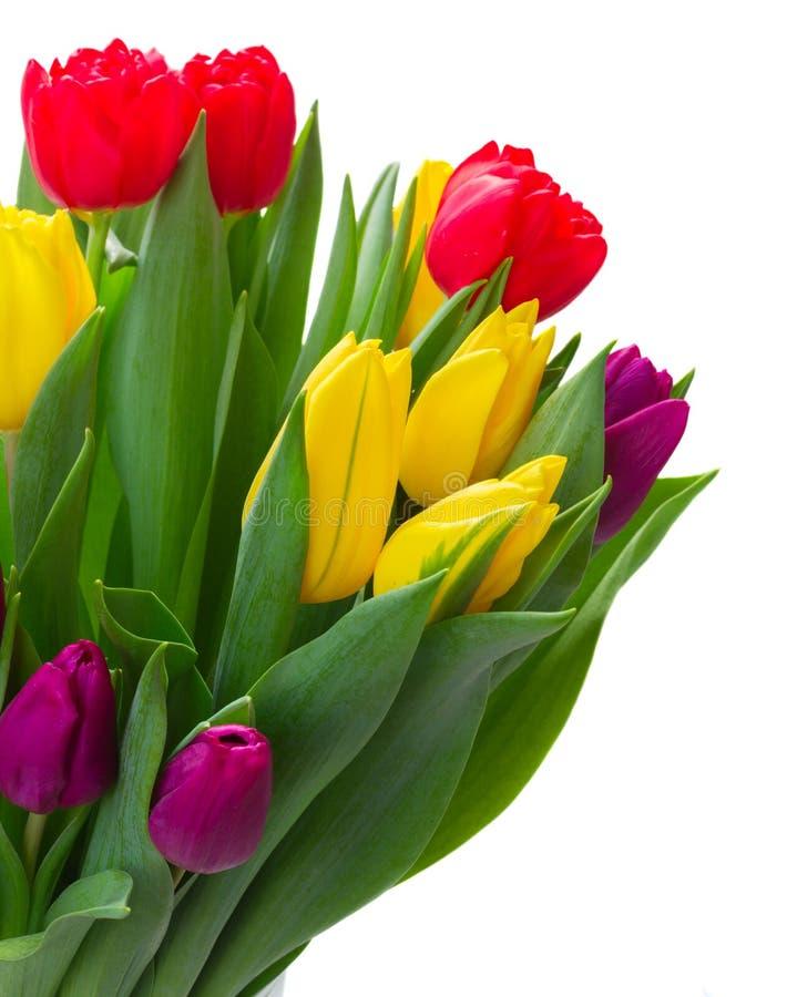 Bouquet des tulipes jaunes, pourpres et rouges photo libre de droits