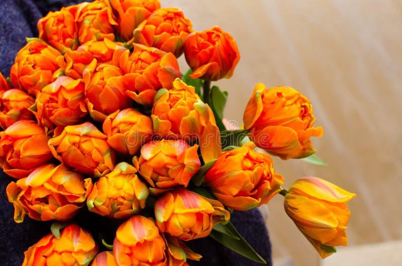 Bouquet des tulipes oranges image libre de droits