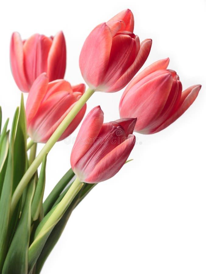 Bouquet des tulipes roses images stock