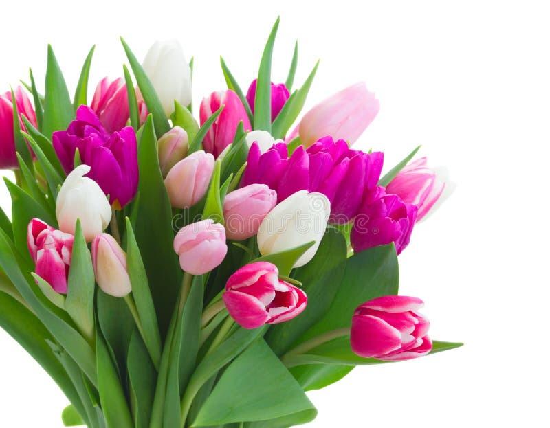 Bouquet des tulipes roses, pourpres et blanches photos stock