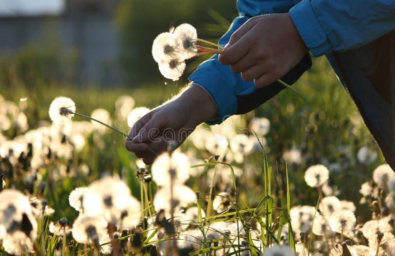 Bouquet des wildflowers image libre de droits
