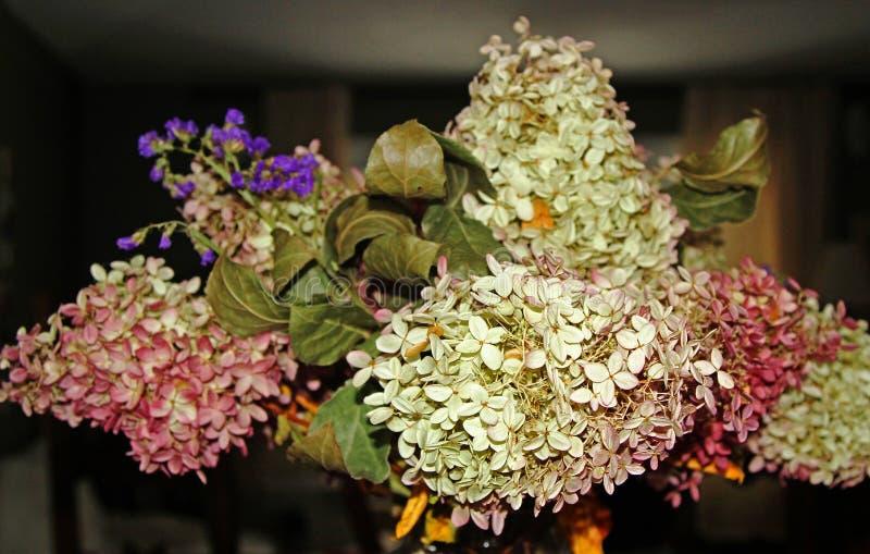 Bouquet di idrangeas secche in un vaso immagini stock libere da diritti