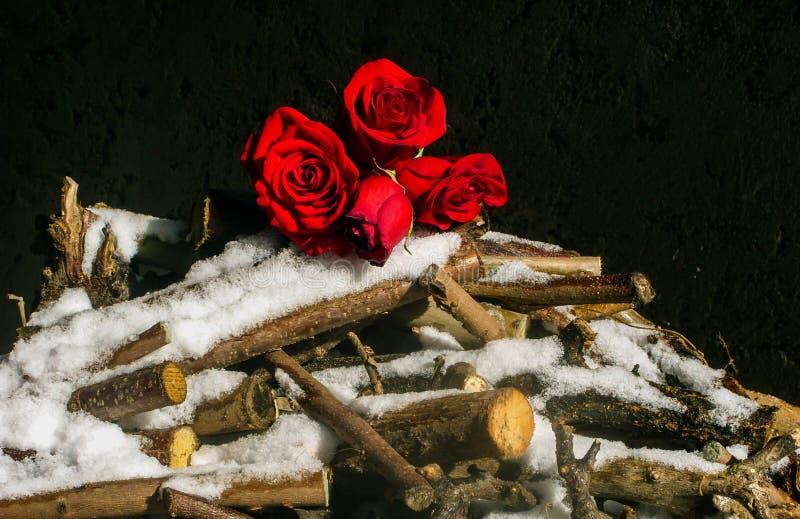 Bouquet di rose rosse sulla neve immagine stock libera da diritti