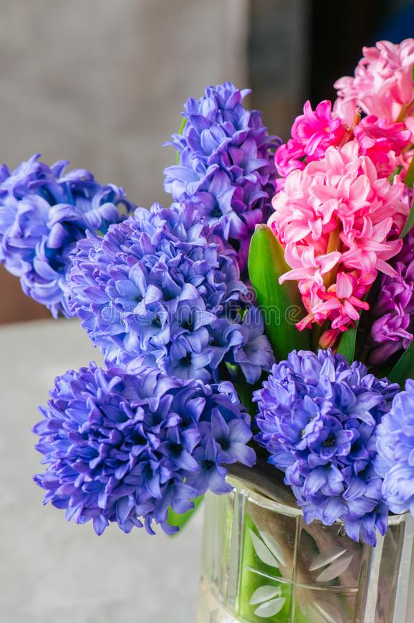 Bouquet of different color of hyacinth flowers in vase. Close up royalty free stock image