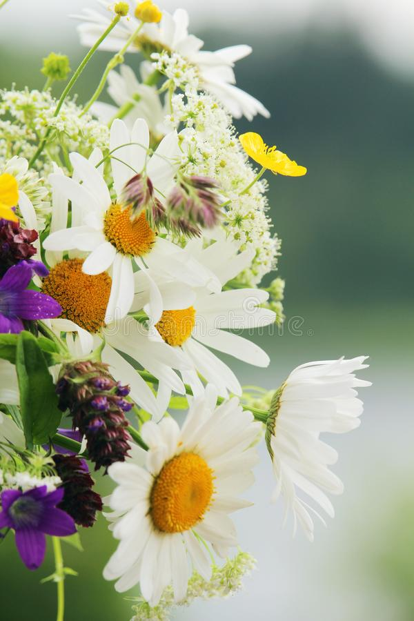 A bouquet of different wildflowers royalty free stock photo