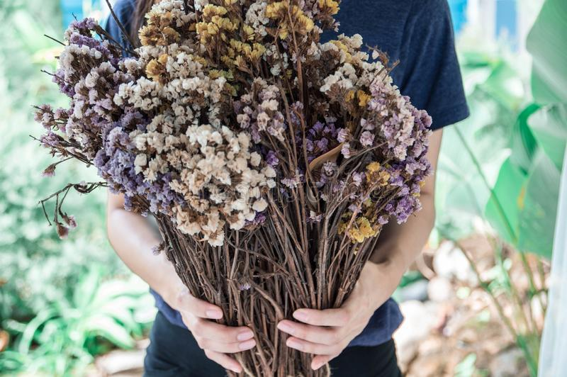 Bouquet of dried flowers in young women hands stock images