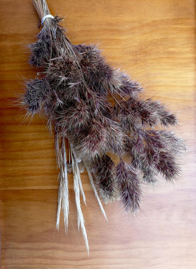 Bouquet of dried grasses. On a wooden background stock photo