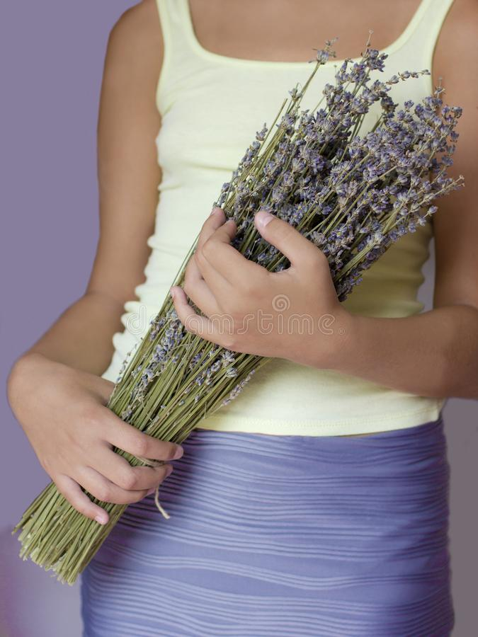 Bouquet of dried lavender in the hands of a young girl stock photo