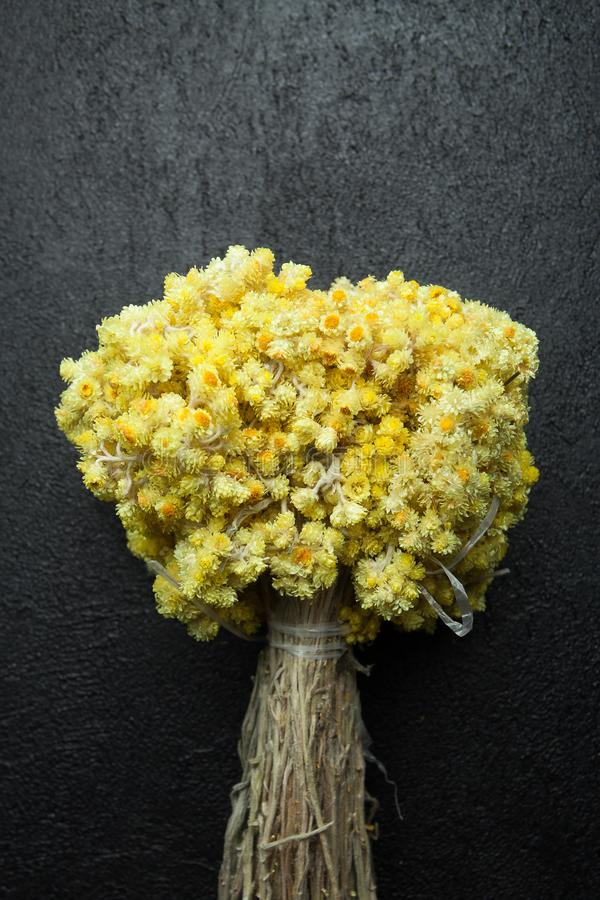 Bouquet of dry immortelle on a black background, vertically.  stock image