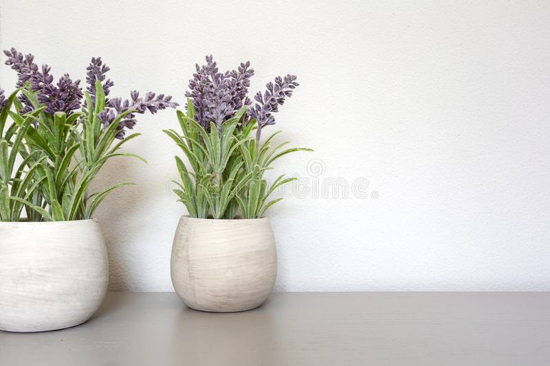Bouquet of dry lavender in ceramic pot with white wall. Copy space for text stock photo