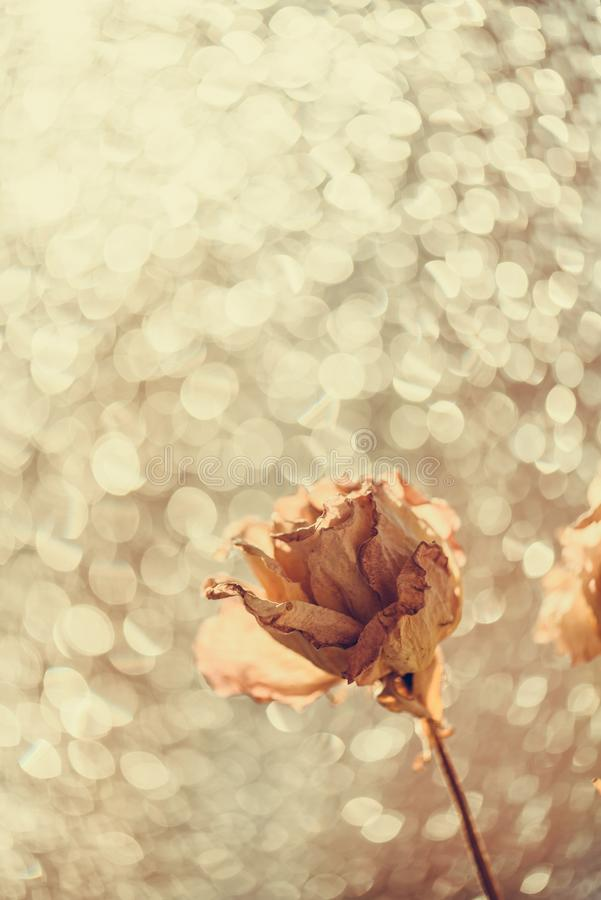 Bouquet of dry roses on window with blurred beautiful bokeh in vintage style sepia. Selective soft focus, Withering concept. Beauty of fading flowers, old royalty free stock image