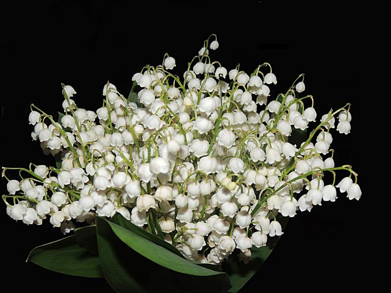 Bouquet du muguet images libres de droits