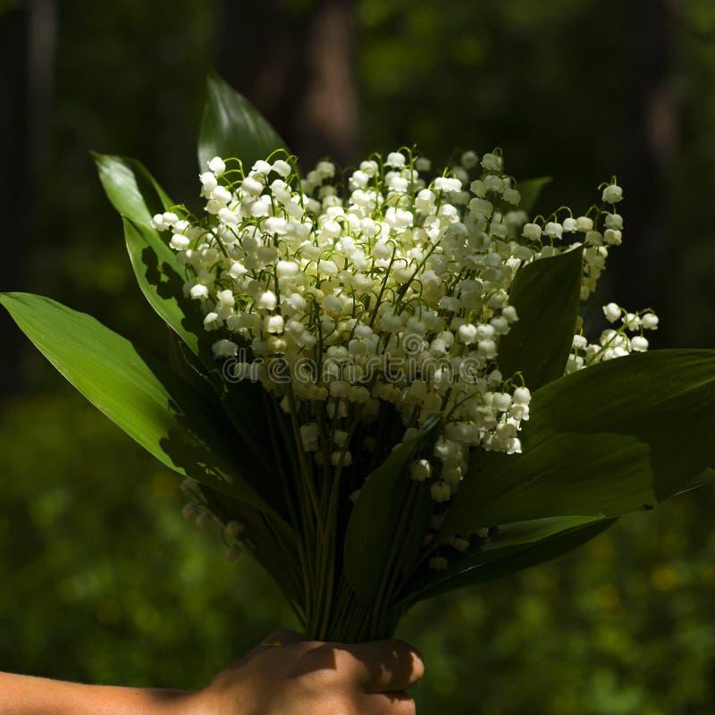 Bouquet du muguet blanc frais de for?t ? disposition en gros plan images libres de droits