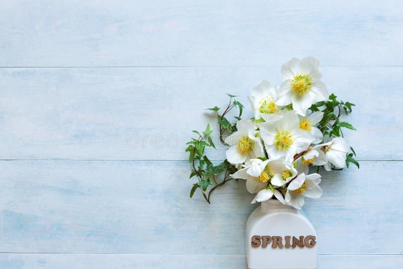 Bouquet en gros plan de la photo A des fleurs fraîches de hellebore de ressort dans un vase blanc photo libre de droits