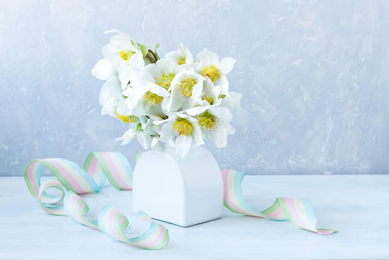 Bouquet en gros plan de la photo A des fleurs fra?ches de hellebore de ressort dans un vase blanc images libres de droits