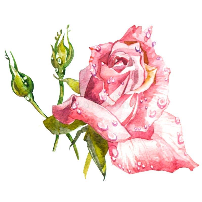 Bouquet et boutonniere d'aquarelle de fleurs illustration stock