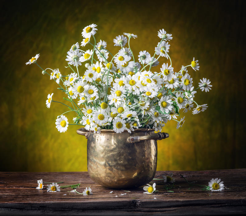 Bouquet of field chamomiles. royalty free stock photos