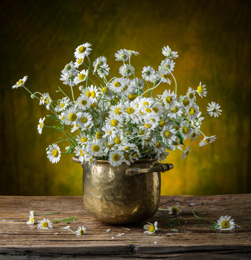 Bouquet of field chamomiles in the vase. royalty free stock photo