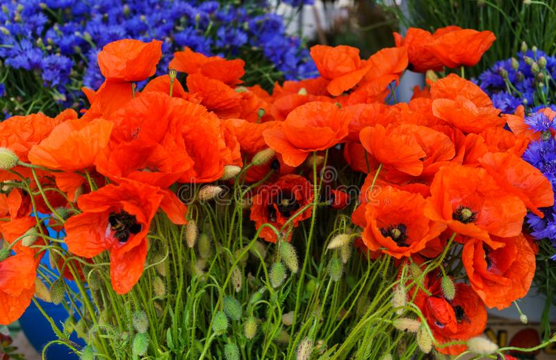 Bouquet of field cornflowers and poppies on the table in a vase stock images