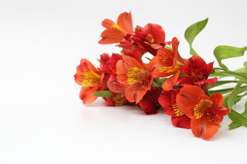 Bouquet of fiery yellow-red flowers isolated on a white background. Plant, daisy, garden, design, petal, bunch, leaves, gift, cut, out, horizontal, soft stock photo