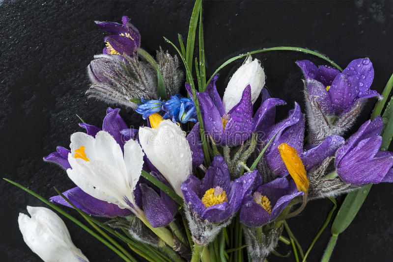 Bouquet of first spring flowers: snowdrops, hyacinth, prairie cr royalty free stock photography