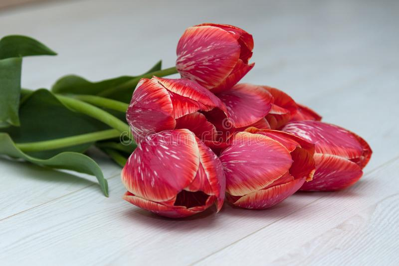 Bouquet of five yellow red striped tulips on a white wooden floor. stock photography
