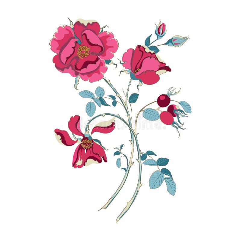 Bouquet floral de belle rose sauvage rouge avec des cynorrhodons sur le fond blanc, en gros plan illustration stock