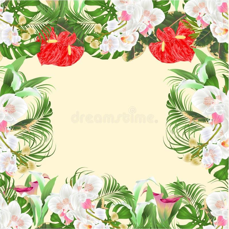 Bouquet floral de cadre avec l'arrangement floral tropical de fleurs, avec de belles orchidées blanches, Lili, paume, vintage v d illustration stock
