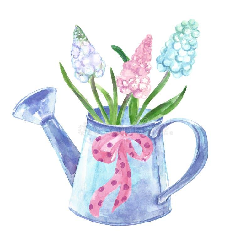 Bouquet floral de ressort d'aquarelle dans un pot de cru Placez des fleurs peintes à la main de muskari dans une boîte d'arrosage illustration stock