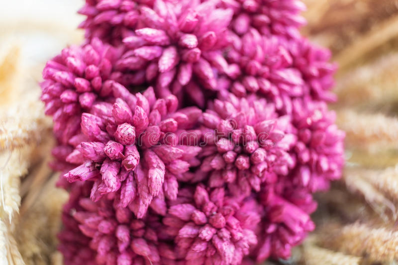 Bouquet flower pink purple close up. On wheat soft backdrop stock photography