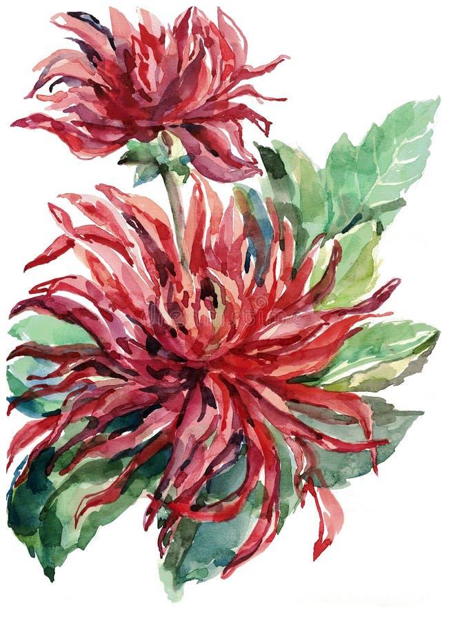 Bouquet flowers , dahlia, watercolor, illustration royalty free illustration