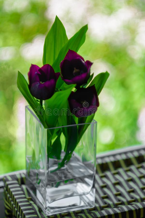 A bouquet of flowers on a green light background. Violet tulips in a vase. Place for your text. View from the window stock photo