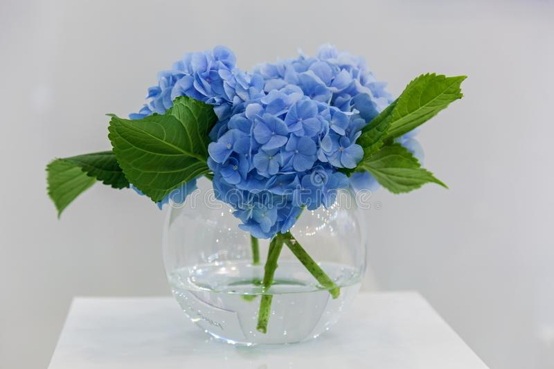 Bouquet of flowers hydrangea in a vase stock photo