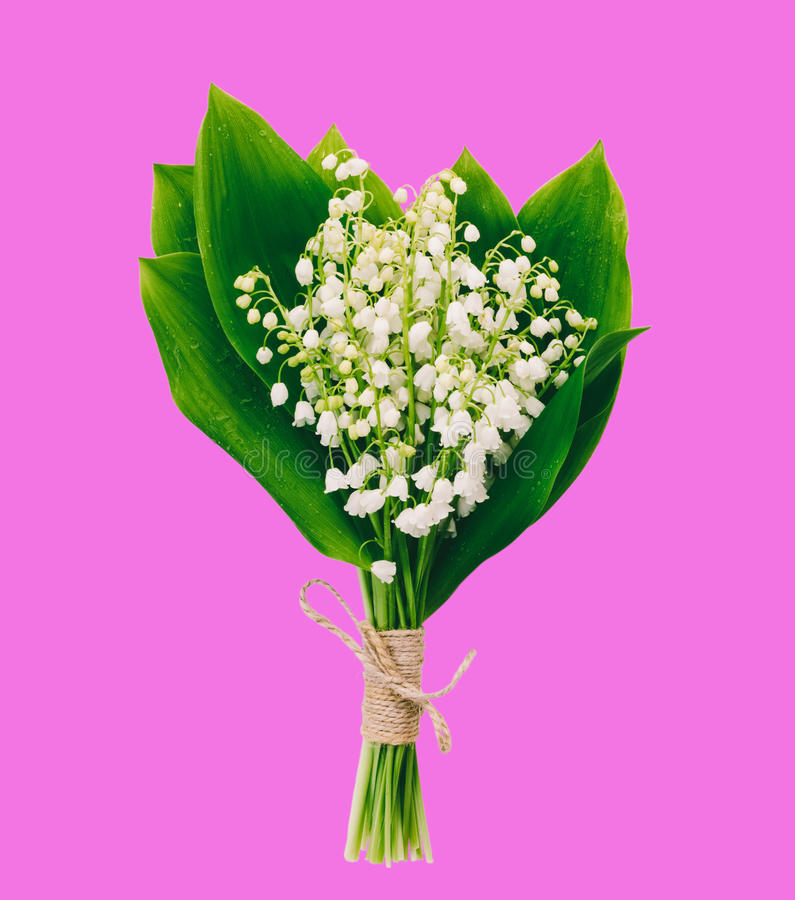 Bouquet of flowers lilies of the valley isolated on pink stock image