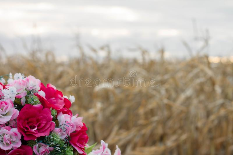 A bouquet of flowers next to a corn field. Bouquet of roses and other flowers next to a corn field in the fall stock photos