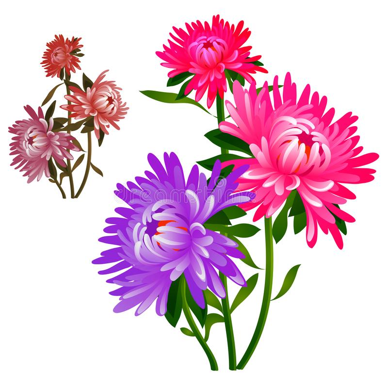 Bouquet of flowers pink and purple asters isolated on white background. Vector cartoon close-up illustration. Bouquet of flowers pink and purple asters isolated vector illustration