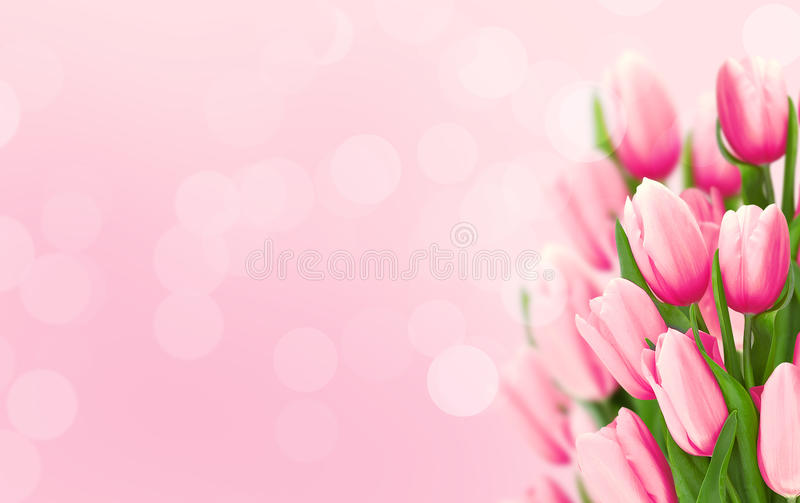 Bouquet of flowers. Pink tulips on blurred background with copy royalty free stock images