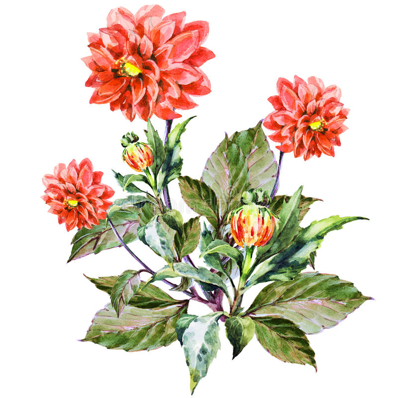 Bouquet flowers, red dahlia, watercolor, pattern vector illustration