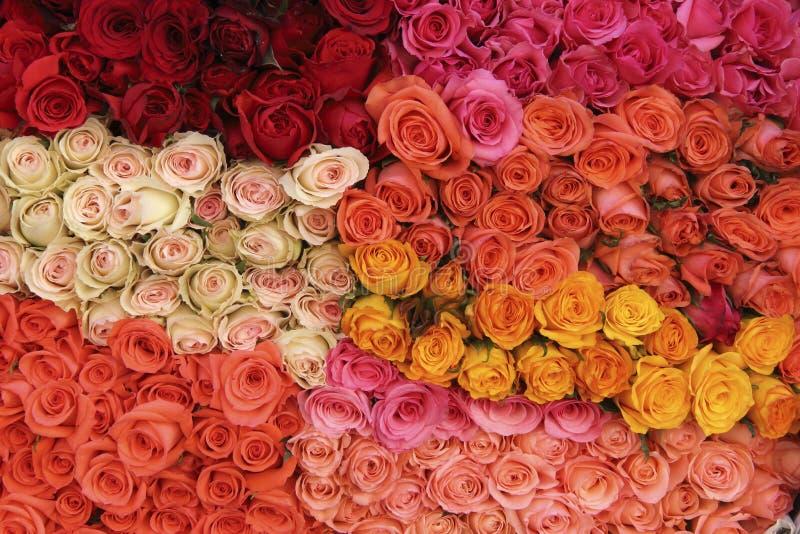 Download Roses stock photo. Image of lifelike, flora, fragrance - 30302358