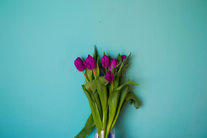 Bouquet of flowers tulips beautiful vibrant leaves of stems on a blue background royalty free stock photos