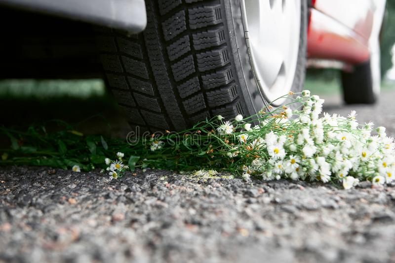 Bouquet of flowers under the car wheel, concept of a car accident royalty free stock image
