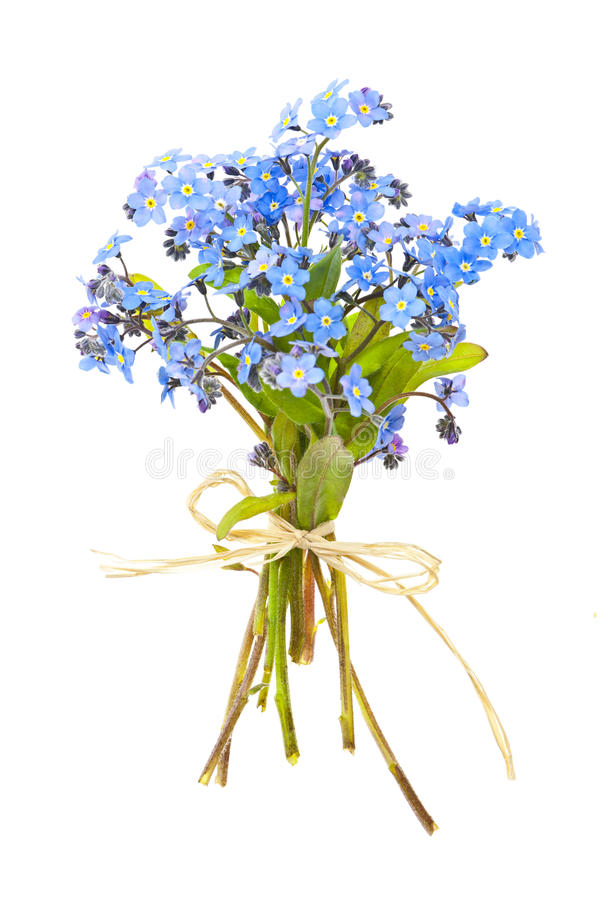 Bouquet of forget-me-nots stock image
