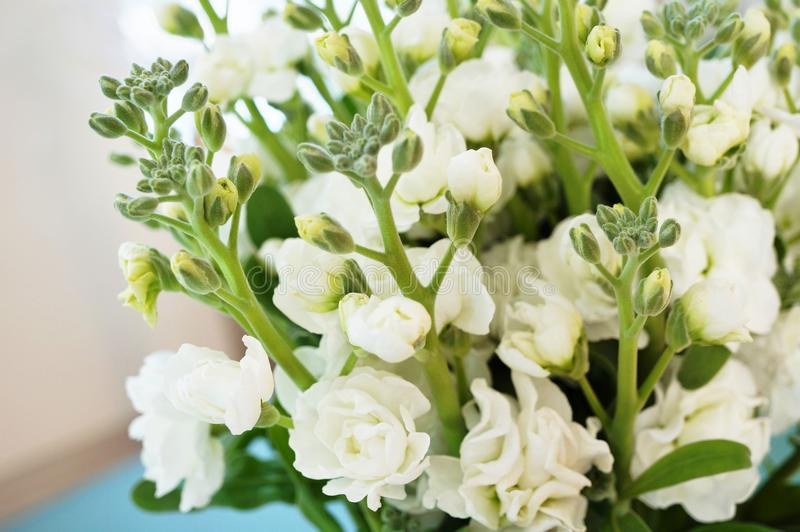 Bouquet of fragrant white stock flowers matthiola stock photo download bouquet of fragrant white stock flowers matthiola stock photo image of incana mightylinksfo Images