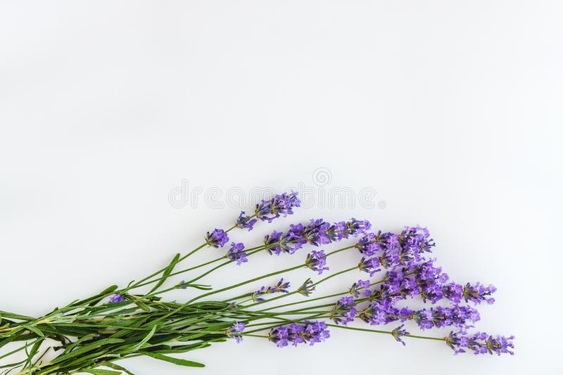 Bouquet of fresh lavender flowers on white background, top view, isolated. Copy space. Flat lay.  stock photography
