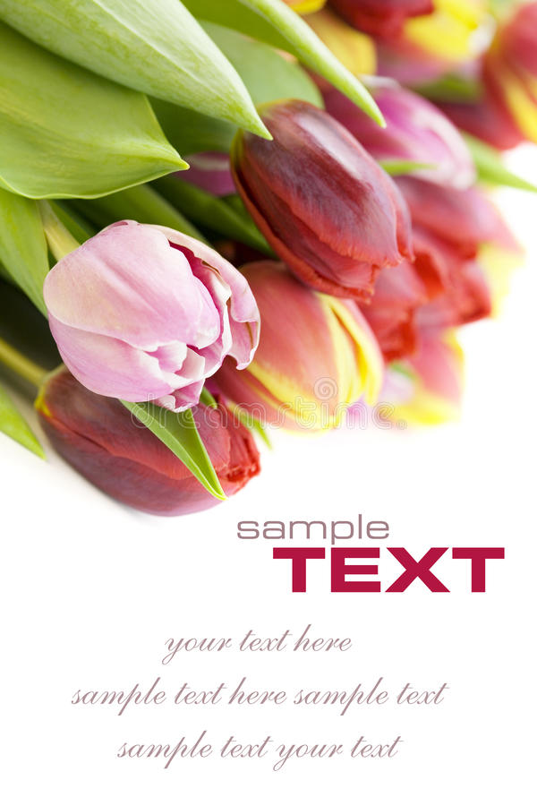 Bouquet of the fresh tulips royalty free stock images