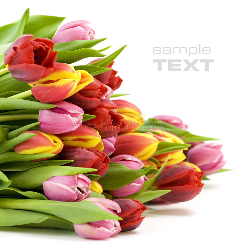Bouquet Of The Fresh Tulips Stock Photo