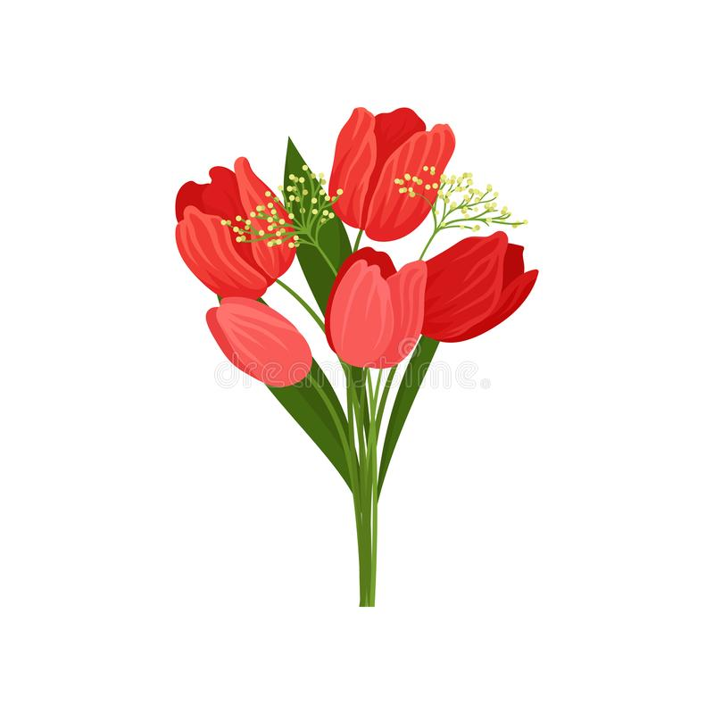 Bouquet of fresh tulips with red petals and green leaves. Beautiful garden flower. Nature theme. Flat vector design. Bouquet of fresh tulips with bright red royalty free illustration