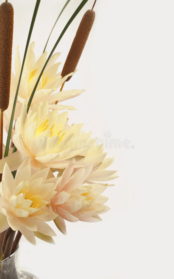 Bouquet of fresh water lilies and cattails in a vase. Bouquet of fresh water lilies over white background stock photo