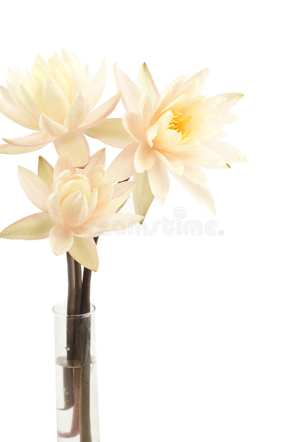 Bouquet of fresh water lilies. Over white background stock photos