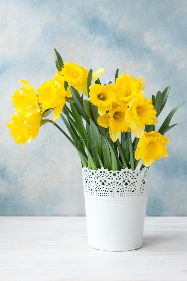 Bouquet of fresh yellow daffodils in vase on sky blue background. Concept for Valentine`s day, wedding, engagement, mother`s da. Bouquet of fresh yellow stock photography